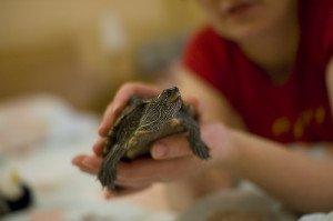 Why Pet Turtles? Turtles as Pets