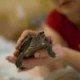 pet turtles - turtles as pets