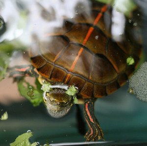All About Turtle Tank Filters