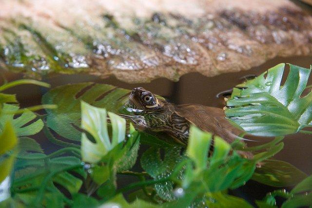 How to setup a turtle tank.
