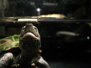 Selecting Aquatic Turtle Food